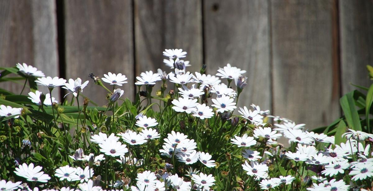 Kleine Tuin Inrichten : Kleine tuin inrichten lees het stappenplan